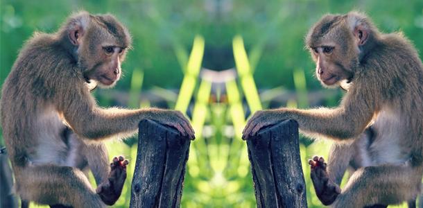 Koh Samui Maymunlar Çiftliği